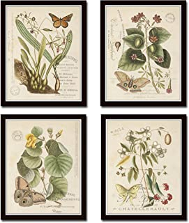 Vintage Butterfly and Botanical Print Set No.1 Set of 4 Giclee Fine Art Prints - Unframed