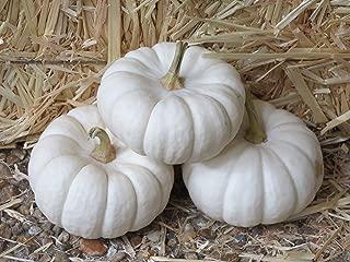 15 WHITE BABY BOO MINI PUMPKIN Miniature Cucurbita Pepo Vegetable Seeds
