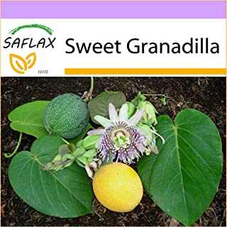SAFLAX - Sweet Granadilla - 20 Seeds - Passiflora ligularis