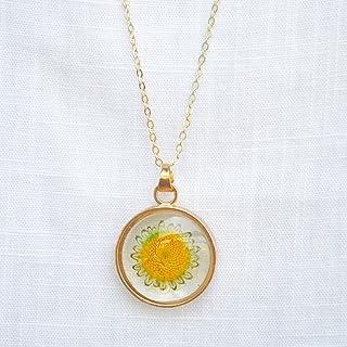 Girasol Helianthus Real Flores Transparente Vaso Medallón Flotante Colgante 18k Chapado en Oro Cadena Collares