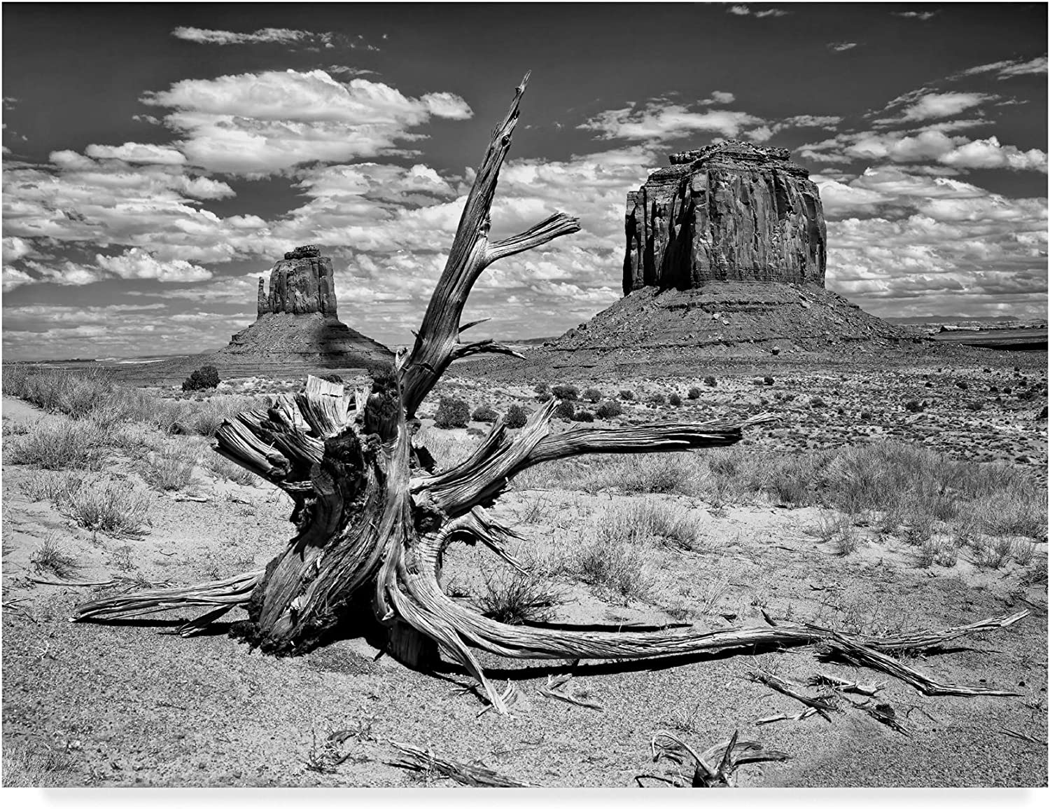 Trademark Fine Art Black and White Desert View V by David Drost, 14x19