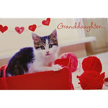 I Love You So Much Granddaughter Because You Re Dear And Fun To Be With Happy Valentine S Day Greeting Card W Cat Office Products