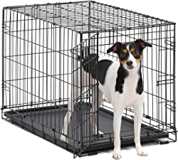 Best Dog Crates for Whippets
