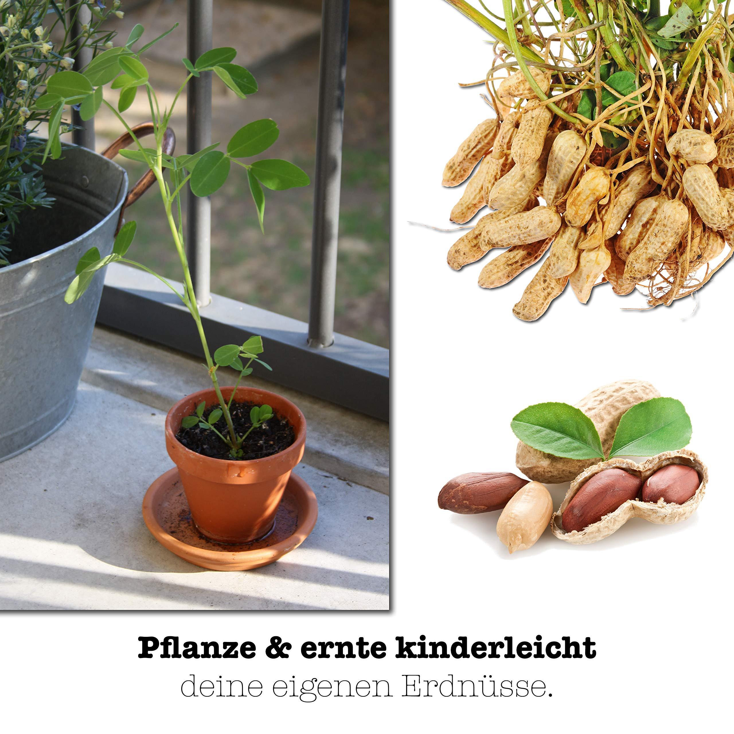 growbro Kids | Cultivo Juego de Cacahuete Planta | responsabilidad ...