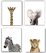Designs by Maria Inc. Safari Baby Animals Nursery Decor Art - Set of 4 UNFRAMED Wall Prints 8x10 (Option 1 (8x10))