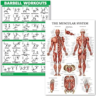 QuickFit Barbell Workouts and Muscular System Anatomy Poster Set - Laminated 2 Chart Set - Barbell Exercise Routine & Muscle Anatomy Diagram (18