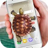 Tartaruga no Telefone - Piada