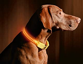 LED Dog Collar, USB Rechargeable, Your Dog Will Be More Visible & Safe, 6 Colours (Red, Blue, Green, Pink, Orange & Yellow...