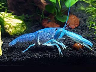 Best hardy's aquatics & pets Reviews