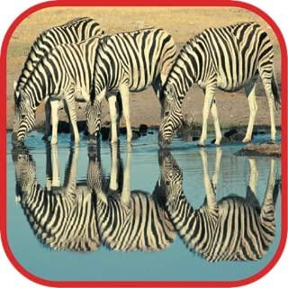 cute zebra wallpapers