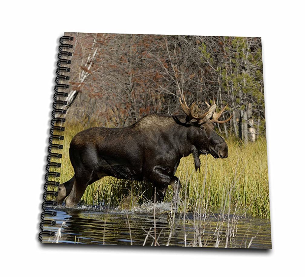 3dRose db_97570_1 Bull Moose Wildlife, Grand Teton Np, Wyoming-Us51 Rnu0047-Rolf Nussbaumer-Drawing Book, 8 by 8-Inch