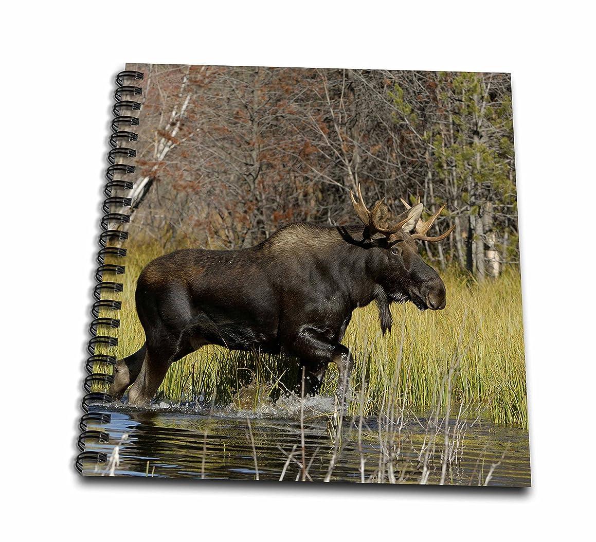 3dRose db_97570_1 Bull Moose Wildlife, Grand Teton Np, Wyoming-Us51 Rnu0047-Rolf Nussbaumer-Drawing Book, 8 by 8-Inch