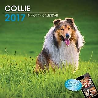 LittleGifts Collie 2017 Calendar (3051)