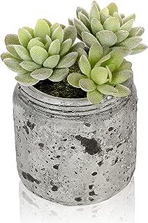 Best air plants in mason jars Reviews