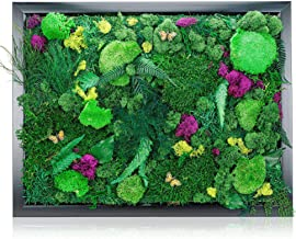 """Natural Wall Art Moss Decorations (18"""" x 24"""") - Indoor Moss Backdrop With Exotic French Moss And Ferns - Plant Decor To Bring Nature Into Your Home And Work Space - Office Wall Plants"""