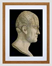 Vintage Science Phrenology Head SPURZHEIM Organ Brain Framed Art Print B12X11834