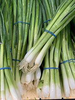 Kejora Fresh Green Onion 4 bundles -Produce of USA