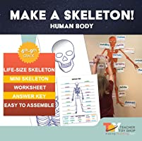 Life Size Printable Human Body Skeleton for Door or Bulletin Board