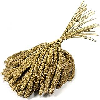 Granos de mijo de 10 pulgadas Britten & James® Premium