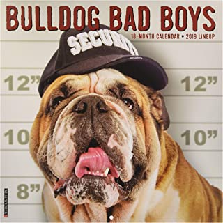 Best bulldog bad boys Reviews