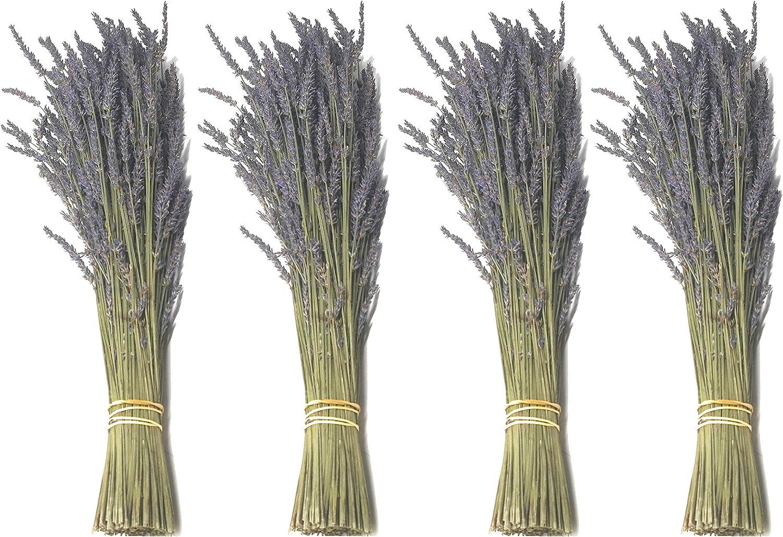 Findlavender Max 71% OFF - Lavender Dried El Paso Mall Premium 22