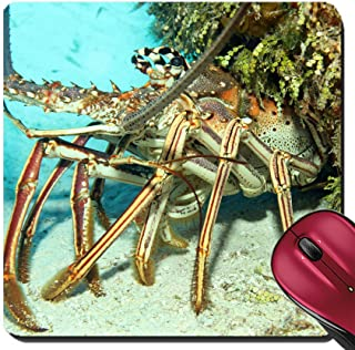 Liili Suqare Mousepad 8x8 Inch Mouse Pads/Mat Close up of a Caribbean Spiny Lobster Panulirus Argus on Sand Bottom Looking Out from its Cavern Cozumel Mexico Image ID 23119131