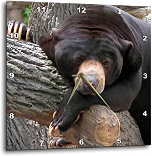 3dRose Beverly Turner Photography Oh Man What a Day Black Bear Wall Clock, 10 by 10-Inch