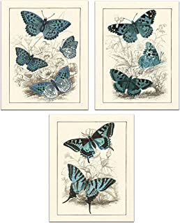 Vintage Print of Insects - Enchanting Butterflies - Gallery Wall Decor Art Print 8 x 10 Unframed (Set of 3)