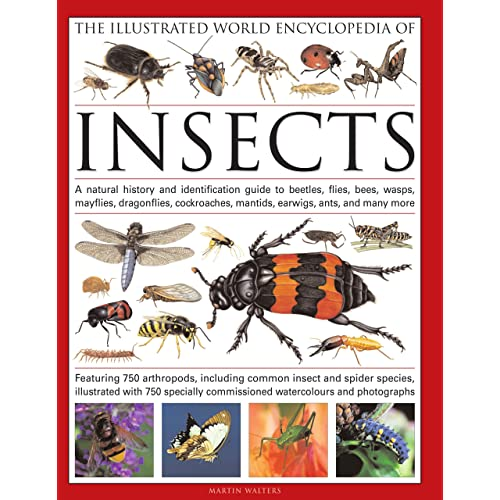 Insect Identification: Amazon com