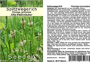 Seedeo® Spitzwegerich Plantago lanceolata 500 Samen