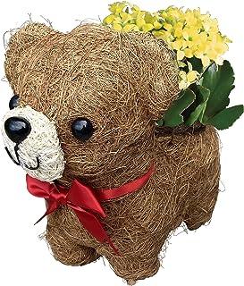 【Amazon限定ブランド】 花のギフト社 くま カランコエ 鉢植え 花鉢 鉢花 テディベア プレゼント