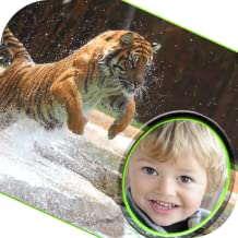 wildlife animals photo frames