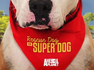 Rescue Dog To Super Dog Season 1
