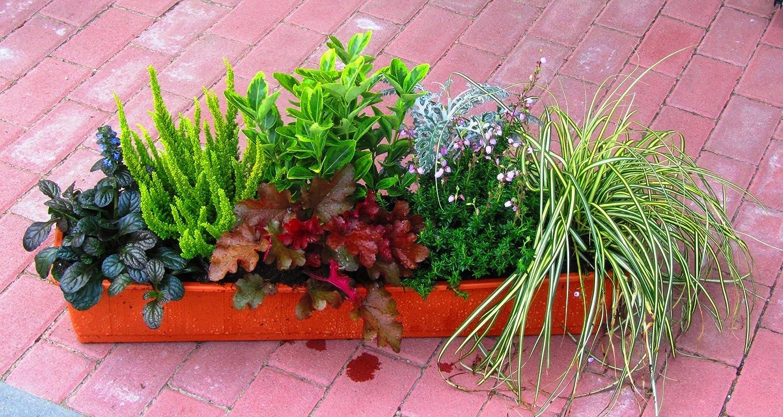 Für den balkon winterpflanzen Winterpflanzen: Das