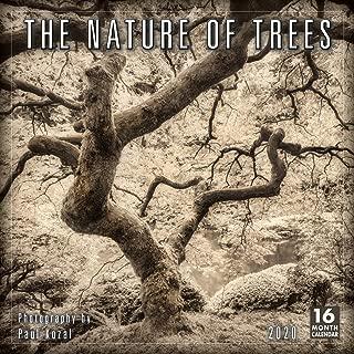 2020 Calendar: The Nature of Trees 2020 Wall Calendar