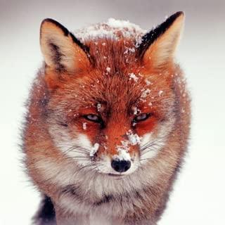 4K Wild Animal Wallpapers