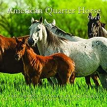 2020 American Quarter Horse Calendar