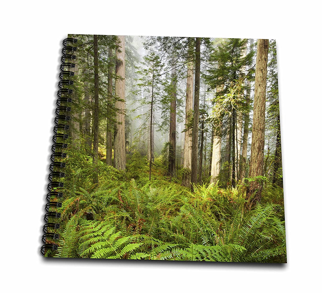3D Rose Redwood Trees in Fog with Sunrays Drawing Book