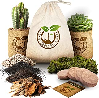 Succulent Cactus Seed DIY Terrarium Germination Starter Kit for Indoor Garden Growing - Mini Terrarium Kit with Seeds, Soi...