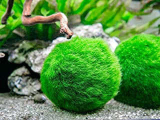 Aquatic Arts 3 Betta Fish Balls - Live Marimo Aquarium Plants for Fish Tanks - Natural Toy Accessories for Betta Fish, Green