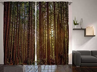 Ambesonne Forest Curtains, Redwood Forest in California USA Nature Outdoors Landscape Woods Park, Living Room Bedroom Window Drapes 2 Panel Set, 108