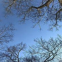 Chewing Oak Leaves