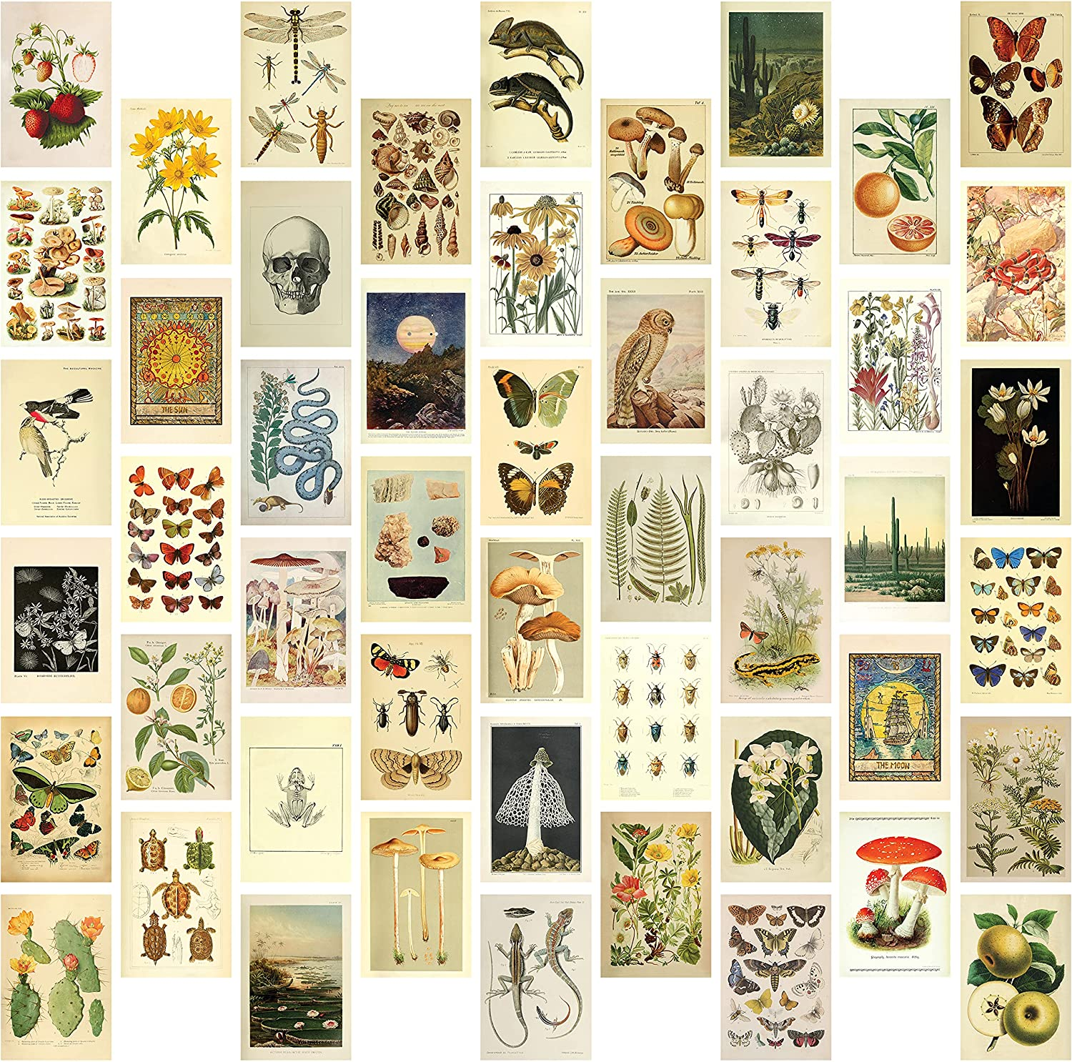 """Vintage Aesthetic Wall Collage Kit - 50 Mini Botanical Cottagecore Collage Art Posters (4"""" x 6""""), for Trendy Photo Wall, College Dorm Room Decor, Cottagecore Decor, Teen Room Boho Decor, Bedroom Wall Art for Girls, includes Vintage Botanical Art Prints, Butterfly Wall Art, Tarot, and more"""