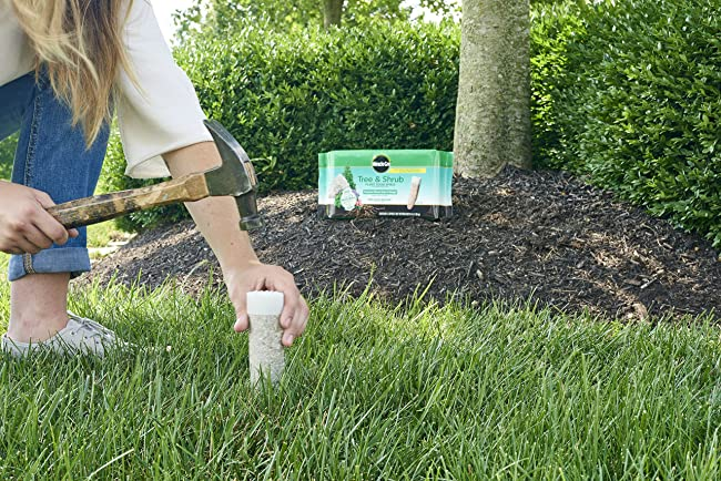 fertilizing trees and shrubs