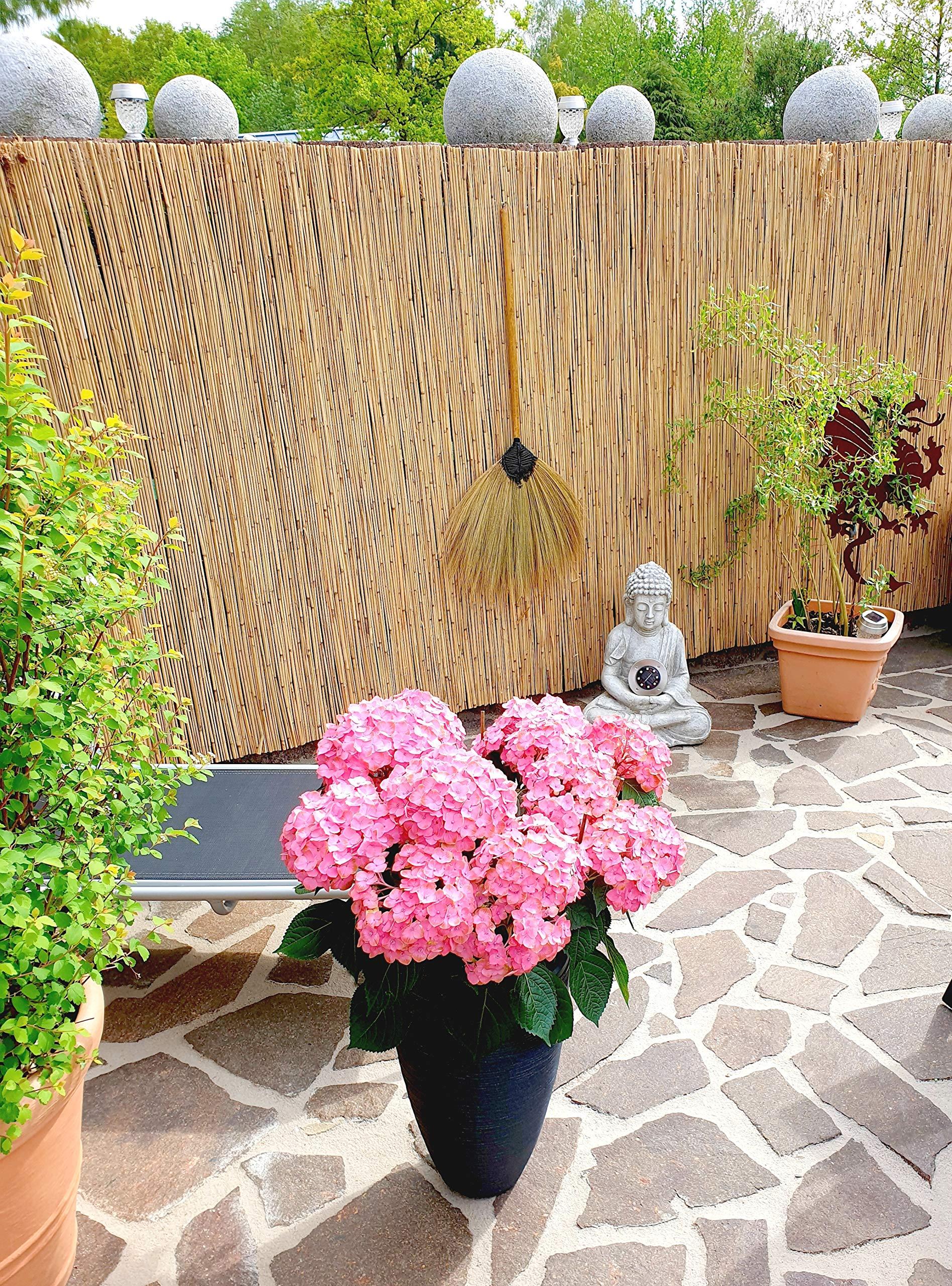 Estera de cañizo en 13 tamaños – Natural Viento y protección Visual Estera de cañizo para casa, jardín y balcón: Amazon.es: Jardín