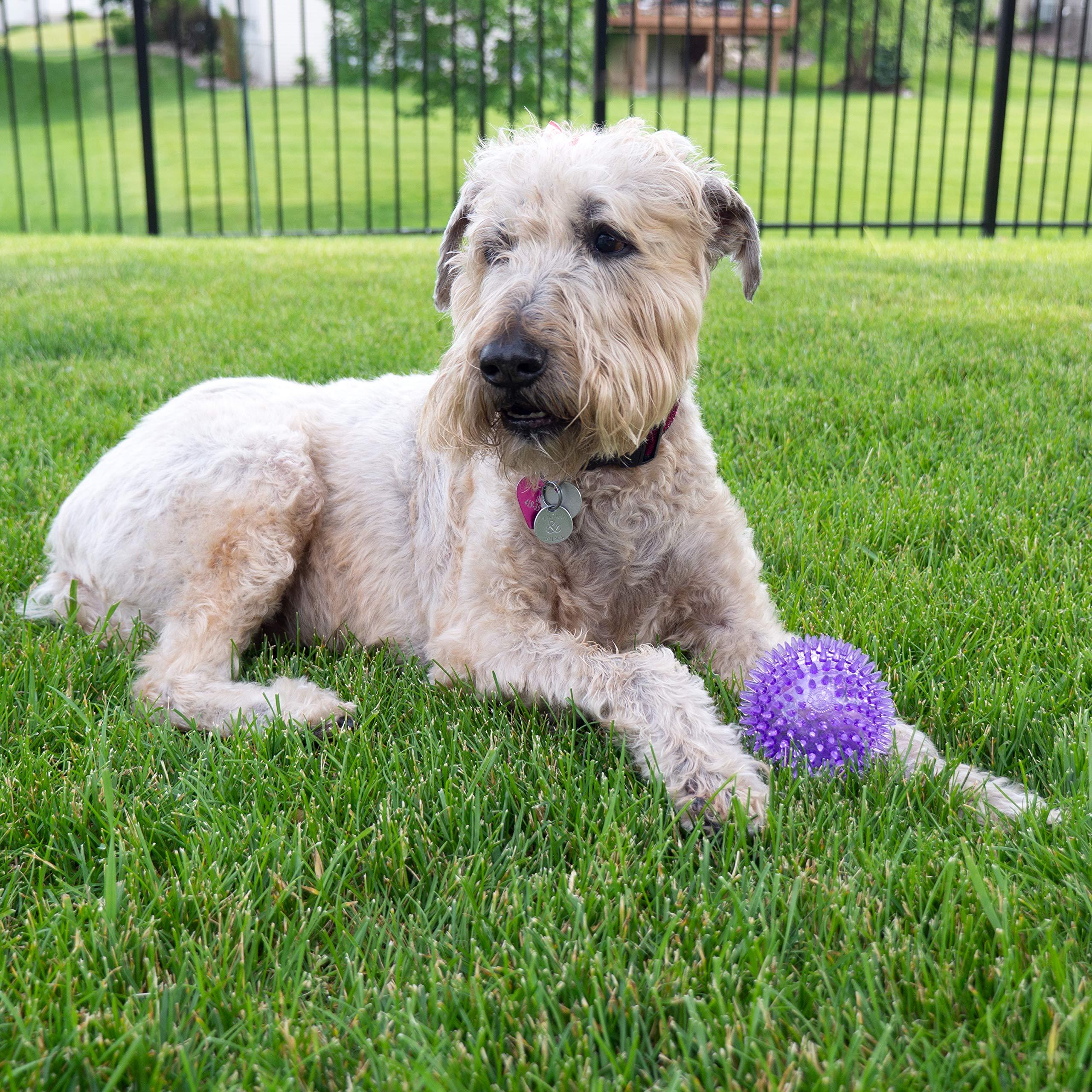 "Gnawsome Medium Squeaker Ball Dog Toy, Medium 3.5"", Colors will vary"