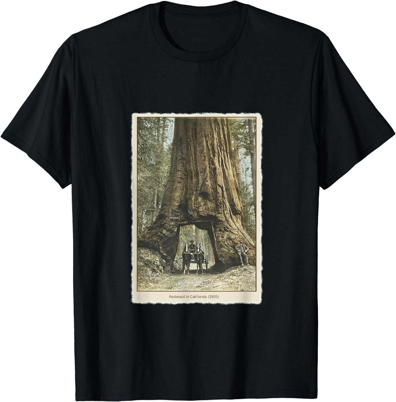 Vintage Redwood Forest T Shirt, California Redwoods Trees