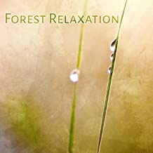 Forest Relaxation – Calming Birds Sounds, Chill in Forest, Soothing Waves, Rest & Relax, New Age Music
