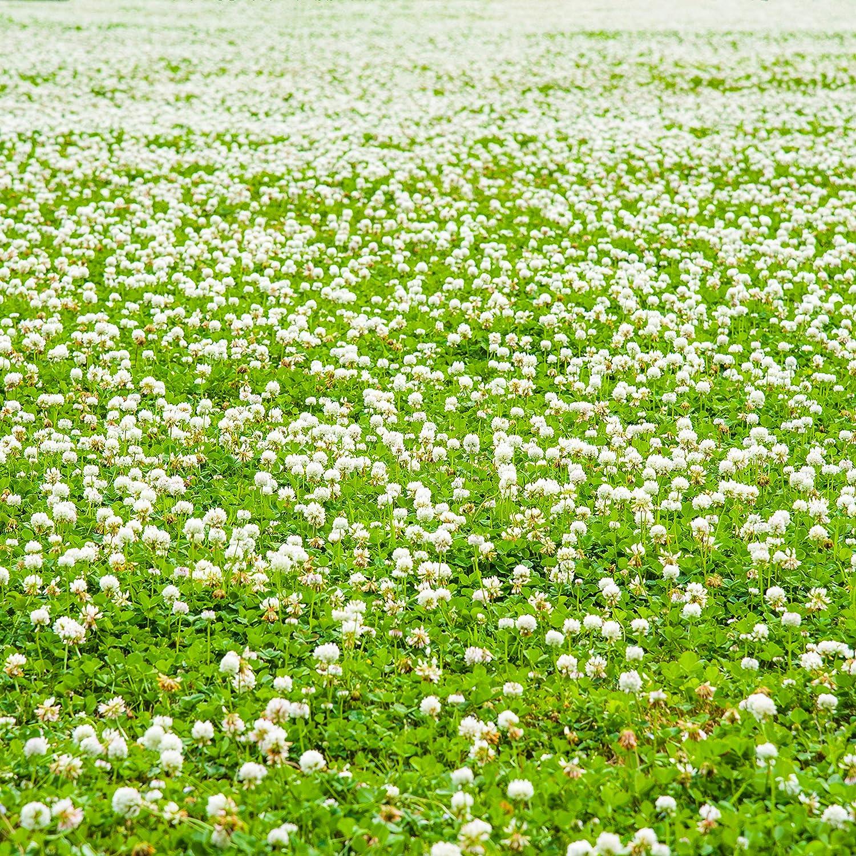 Nitro-Coated Outsidepride White Dutch Clover Seed 10 LBS Inoculated