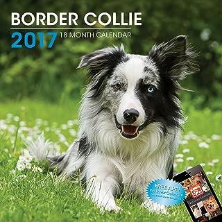 LittleGifts Border Collie 2017 Calendar (3049)